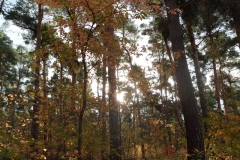 Herbstwald_Hirschacker