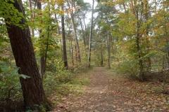Herbstwald_Naturschutzgebiet
