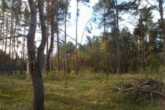 Naturschutzgebiet_Unterer Dossenwald